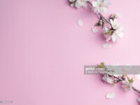 Winter composition. Almomd flowers on pink background. Autumn, winter concept. Flat lay, top view, copy space, square